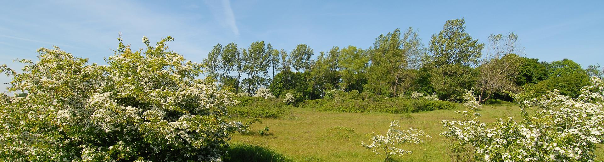 Gartenstadt Stiftungsland Naturschutzgebiet